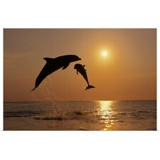 Poster Print Wall Art entitled Pair Of Bottle Nose Dolphins Jumping At Sunset,