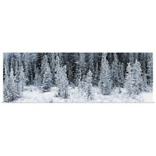 Poster Print Wall Art entitled Panoramic view of hoar frost covered spruce trees