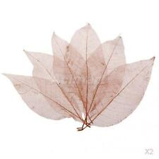 2x50pcs Natural Magnolia Skeleton Leaf Leaves Card Scrapbook Craft Supply Coffee