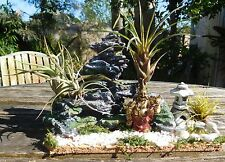 MINIATURE  CHINESE AIR PLANT GARDEN Lucky Buddha  for TABLE or WINDOWSILL