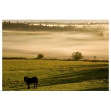 Poster Print Wall Art entitled Horses In The Morning Mist, North Wiltshire,