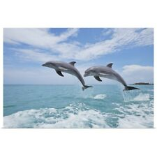Poster Print Wall Art entitled Common Bottlenose Dolphins Jumping in Air,