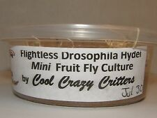PRELOADED Mini Hydei FRUIT FLY CULTURE 100% Organic AFFORDABLE & ROBUST