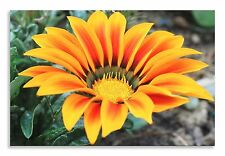 Flower Gazanie Red Yellow Flower  Canvas Wall Art Picture Home Decor Print