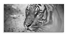 Tiger Face Canvas Hunting Cat Black White  Panorama Wall Art Picture Home Decor