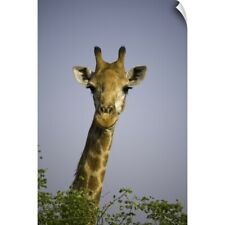 Wall Decal entitled Giraff looking at camera, in Kruger National Park in South