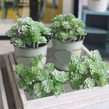 Artificial plants Decoration Display Indoor Succulents Simulation Home