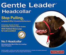 NEW BeauPets Gentle Leader Head Collar, FREE Training DVD with Dog Headcollar