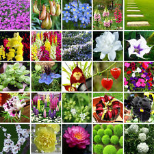Beautiful Multifarious Ornamental Flower Plant Seeds Garden Home View Decor