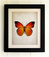 FRAMED BUTTERFLY PRINT - Vintage Style, Shabby Chic, Fab Picture Gift, Handmade