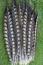 Wholesale 10-200 PCS natural golden pheasant feather 12-14 inch/30-35 cm
