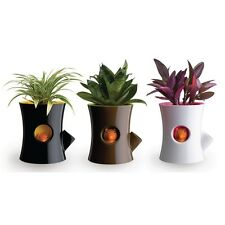 MIni Self Watering Squirrel Flower Pot Lovely Squirrel Plant Pots Home Decor
