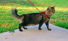Cat Harness Lead, Red Blue Black Kitten or Small pet Dog Adjustable Lead