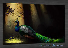 Oil Painting HD Print Wall Decor Canvas,Forest Peacock 24x36(Unframed)