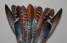 17 Large Natural Feathers 12-22cm pheasant guinea fowl, turkey, duck millinery