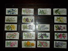 . CIGARETTE CARD ODDS WILLS OLD ENGLISH GARDEN FLOWERS 2ND 1913 CHOOSE CARD
