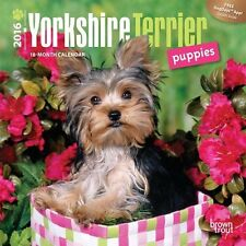 Yorkshire Terrier Puppies 2016 Mini Wall (Calendar) BT