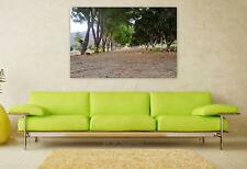 Stunning Poster Wall Art Decor Nature Trail Landscape Outdoors 36x24 Inches