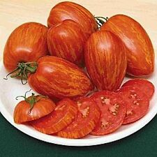 Red Specled Tomato - STRIPED ROMAN - 10/20 Heirloom Organic Vegetable Seeds