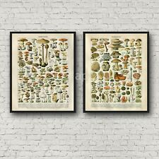 2 Poster Print Set Colorful Mushrooms Botanical Kitchen Decor Larousse Repro