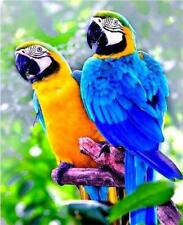 Parrot Diamond Painting DIY 5D Animal Mosaic Home Room Wall Decor Crafts Gifts