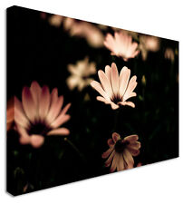 Blooming Beauty In Darkness Petals Flower Canvas Wall Art Print