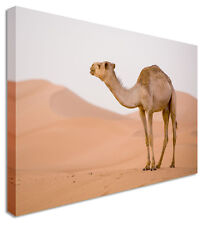 Large Lonely Camel Desert Canvas Pictures Wall Art Prints