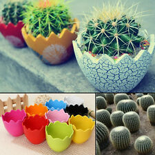 Egg Plastic Container Pot Planter Succulent Home Office Decor Cactus Seed Free