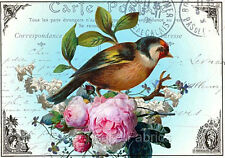 Carte Postale Bird Roses Collage Quilt Block Multi Szs FrEE ShiP WoRld WiDE (P3