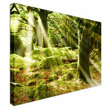 Sun Beaming through the Forest Canvas wall Art prints high quality great value