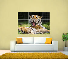 Funny Tiger Animal GIANT Wall Poster, Various sizes from A3 up to 49.6 x 35 Inch