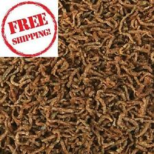 FREEZE DRIED BLOODWORMS for all Tropical & Marine Fish High Quality Fish Food