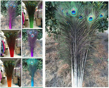 Wholesale!10/20/50/1000 PCS peacock feathers eye 28-32 inches / 75-80 cm Choose