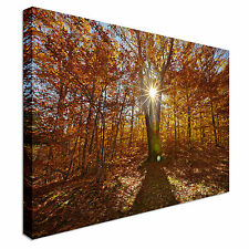 Light Through Trees Canvas wall Art prints high quality great value