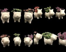 3x Mini Ceramic Animal Pot Plant Planter Flower Pots Home Office Desk Decor Dog