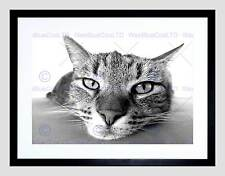 ANIMALS NATURE PET CAT BLACK WHITE FACE BLACK FRAMED ART PRINT PICTURE B12X5071