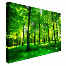 Sunlight In A Green And Lush Forest Canvas Wall Art prints high quality