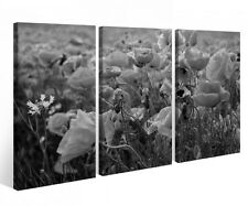 Canvas Picture 3 Pc Flowers Meadow Poppies black Flower canvas picture 9P796