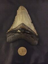 "5"" Good Condition Fossil Megalodon Shark Tooth (17-552)"