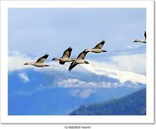 Snow Geese Flying Mountains Skagit Art Print Home Decor Wall Art Poster - C