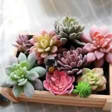 Artificial Succulent Fake Plants Aloe Cactus Landscape Flower DIY Faux Accessory