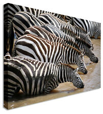 Zebra Watering Hole Canvas Pictures Wall Art Prints