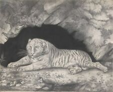 Photo Print Reproduction Tiger Lying Entrance Of Cave Elizabeth Pringle Ot