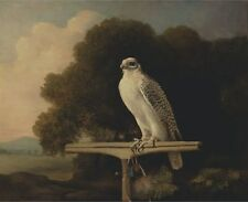 Greenland Falcon George Stubbs 1780 Art Photo/Poster Repro Print Many Sizes A
