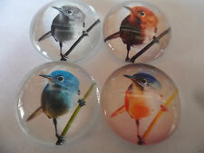 4 x Colourful Birds Images Glass Cabochons, Jewellery Projects,Scrapbook,Crafts