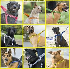 Strong As Leather Non-Pull Dog Harness+Short Standard Or Extra Long Lead Or Sets