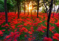 Red Flower Nature Park Sunset 3D Full Wall Mural Photo Wallpaper Home Decal Deco