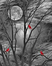 Black White Red Wall Art/Bird On Tree Branch Moon Home Decor Matted Picture