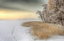 Misty Winter Morning, Canvas or Stretched Canvas Print