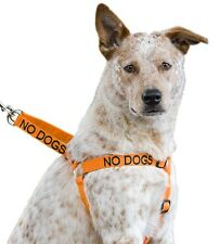 Orange NO DOGS Dog Harness (Not Good With Other Dogs) And Padded Handle Lead Set